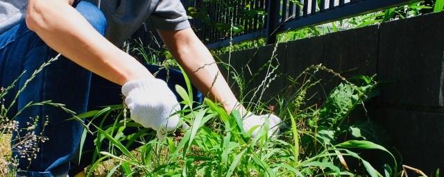 除草作業からの解放